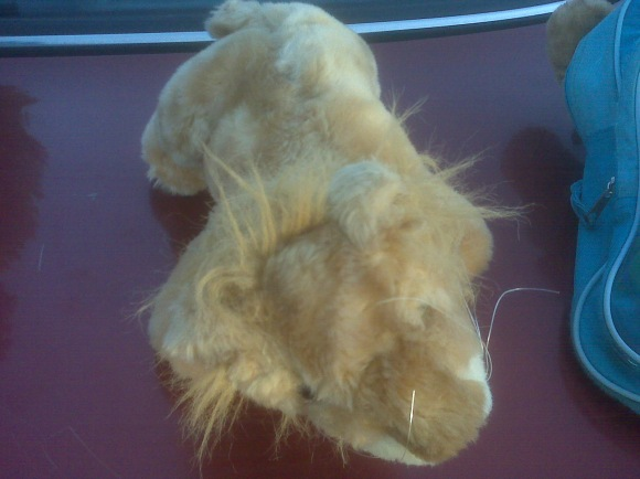 Lion after stuffed animal mending